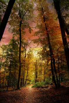 Forest Sunset...beautiful and what a glorious photograph! <pin by Stephen Sherlock on Astounding Scenery>