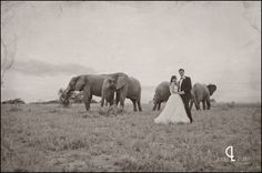 Bridal couple and African elephants {www.lindytruter.com}