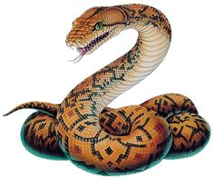 snake pictures - Google Search