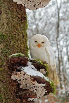 Beautiful little owl...