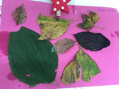 We went leaf collecting then made a picture from them :)