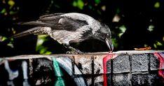 genius crow. #phunst #photo #photography #photooftheday #picoftheday #nature #art Modern Art, Contemporary Art, Installation Art, Art Day, Insta Art, Crow, Abstract Art, Digital Art, Graphic Design