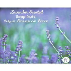 Loads of Love offers 100% pure organic fresh lavender scented soap nuts.