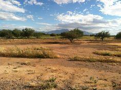 Beautiful open space #desert #Arizona #nature Vineyard, Arizona, Country Roads, Scene, Nature, Outdoor, Beautiful, Outdoors, Naturaleza