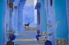 """Chefchaouen, a small town in northern Morocco, is most famous for their vivid blue walls in its """"old town"""" sector. The maze-like medina sector features a fusion of Spanish and Moorish architecture. The brilliantly blue walls, however, seem to be unique to Chefchaouen. They are said to have been introduced to the town by Jewish refugees in 1930, who considered blue to symbolize the sky and heaven."""