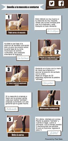 Enseña a tu mascota a sentarse #animalPlanet #AnimalPlanetMexico #AnimalPlanetMascotas #Perros #Sentarse #Como #Infografia