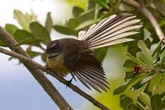 Image result for painting fantails