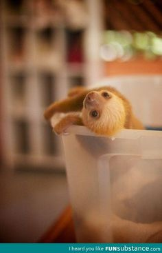 Baby sloth:) can we @Cory Brine Brine Whitmore ?? Pleaseeeeee!