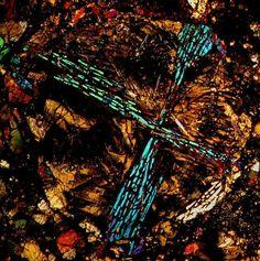 NWA 4560 LL3.7 meteorite thin section viewed through a polarizing microscope