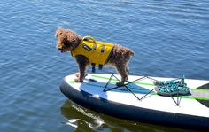 Teaching your pup how to paddle board