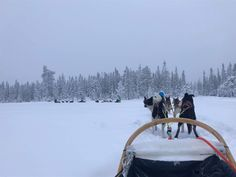 JMs are dog-sledding after hard work at in (Norway)