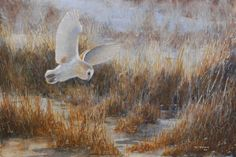 'Frosty morning - Barn Owl' by Paul Armstrong
