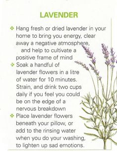 Lavender, a beautiful magic plant. I put a few drops of pure lavanda oil on cotton balls and place them in wordrobes, drawers and ofcourse in a little vag above my head for nice dreams*☆ Healing Herbs, Holistic Healing, Medicinal Plants, Natural Healing, Magic Herbs, Herbal Magic, Natural Medicine, Herbal Medicine, Herbal Remedies