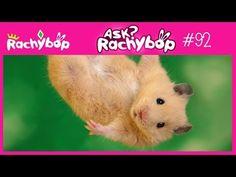 Cursed Hamster - Ask  Rachybop #92
