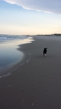 Tuckers first trip to the beach. -Nancy Martindale