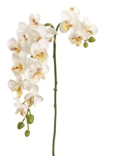 "Dancing Silk Orchid Stem in White<br>22"" Tall"