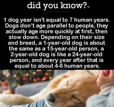 1 dog year isnt equal to 7 human years. Dogs dont age parallel to people, they actually age mo… Dog Facts, Animal Facts, Facts About Dogs, I Love Dogs, Puppy Love, Thing 1, Dog Information, Dog Years, Wtf Fun Facts