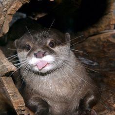 Silly otter