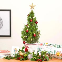 Tiny Christmas Tree – Floraly