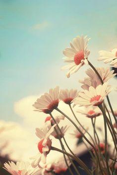 ceu, daisies, daisy, flower, margarida, margaridas - image #1825 on Favim.com