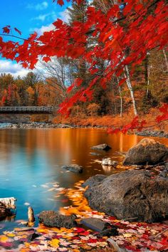 Fall Pictures, Fall Photos, Nature Pictures, Beautiful World, Beautiful Places, Beautiful Scenery, Landscape Photography, Nature Photography, Contrast Photography