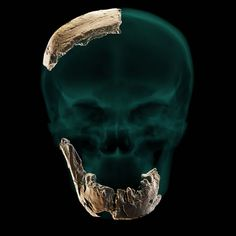 Puzzling skull discovery may point to previously unknown human ancestor Homo Heidelbergensis, National Geographic, Early Humans, First Humans, George Washington, Human Fossils, Human Pictures, Human Evolution, Archaeology News