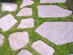 DIY concrete pathway with Irish Moss Moss Garden, Garden Paths, Walkway Garden, Irish Moss Ground Cover, Concrete Pathway, Flagstone Patio, Diy Concrete, Front Walkway, Slate Walkway