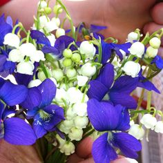 Violet and Lilly of the Valley