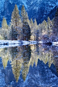 Neon Trees by Robert Bolton, Yosemite National Park by the Merced River