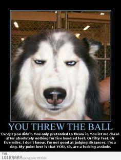 @ Emily Payne. haaaahahahahaha Lol, Funny, Animals, Tired Funny, Animales, Animaux, Wtf Funny, Animal, Hilarious