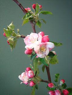47 Ideas Apple Tree Tattoo U. Apple Blossom Flower, Spring Blossom, Cherry Blossom, Apple Blossoms, Tree Wallpaper, Apple Tree, Flowering Trees, Dream Garden, Ikebana