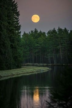 Full moon forest nature photography