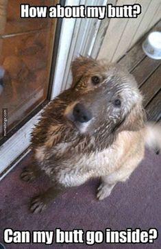 Poor puppy needs a bath