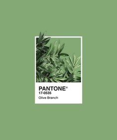 Pantone Series - Olive Branch Throw Pillow by maines - Cover x with pillow insert - Indoor Pillow Pantone Colour Palettes, Pantone Color, Wall Prints, Framed Art Prints, Paleta Pantone, Pantone Green, Pantone Swatches, Journal Stickers, Aesthetic Stickers