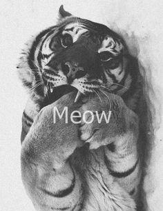 meow, tiger, wallpaper