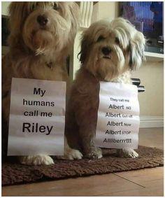 Funny Dog Memes, Funny Animal Memes, Funny Animal Videos, Cute Funny Animals, Cute Baby Animals, Funny Dogs, Dog Videos, Dog Shaming Photos, Cute Puppies