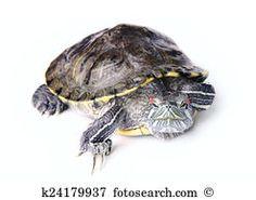 Tartaruga Banco de Imagens e Fotos 25.287 tartaruga fotografias disponíveis para baixar em mais de 100 bancos de imagens.