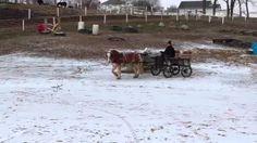 Windy Hill Farm - YouTube