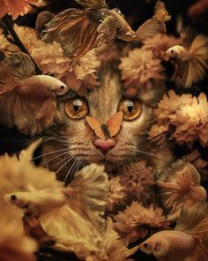 Delighful Worlds Of Fantasy and Dreams by Marcel Van Luit Nature Animals, Animals And Pets, Cute Animals, Tier Wallpaper, Animal Wallpaper, Beautiful Creatures, Animals Beautiful, Marcel, Crazy Cats