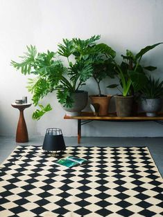 Image - Siren Lauvdal. Indoor greenery via Temple & Webster