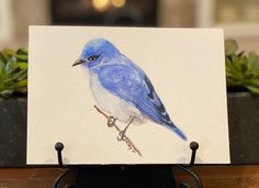 "Barbara Ford on Instagram: ""#watercolor #watercolorbirds #mountainbluebird In WA we see these Mountain Bluebirds, along with the Steller's Jay and Scrub Jay. In…"" Bluebirds, Blue Jay, Scrubs, Ford, Mountain, Watercolor, Animals, Instagram, Pen And Wash"