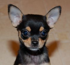 Rocky - 2007 - still a puppy - still innocent!