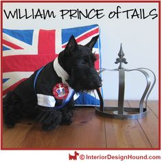 William Prince of Tails