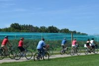 From organized winery cycling tours to self-guided routes along Great Lake shorelines, these on-road routes offer great options for scenic pedals on the country roads of Ontario's Southwest. Bike Experience, Road Routes, Essex County, Bike Trails, Great Lakes, Vacation Spots, Ontario, Country Roads, Cycling Tours