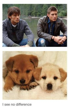 Lol haha funny pics / pictures / animals / puppies / dogs / cute / Sam / Dean / Supernatural Humor / Season 1