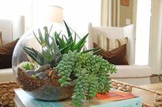 Terrarium garden with succulents Terrarium Containers, Terrarium Plants, Succulent Terrarium, Planting Succulents, Succulent Plants, Terrarium Centerpiece, Indoor Succulents, Glass Terrarium, Glass Containers