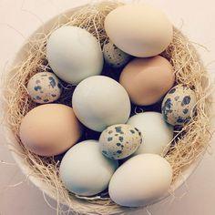 Easter Eggs!!!