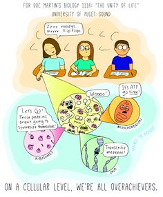 On a cellular level, we're all overachievers! (Beatrice the Biologist)