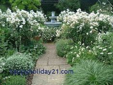 House Remodeling Is Residence Improvement White Garden Moon Gardens, White Gardens, White Flowers, Etc. White Gardens, Small Gardens, Front Gardens, Garden Shrubs, Garden Landscaping, Beautiful Gardens, Beautiful Flowers, Townhouse Garden, Victorian Gardens