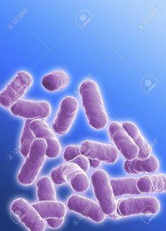 Znalezione obrazy dla zapytania bakteria bacillus kształt